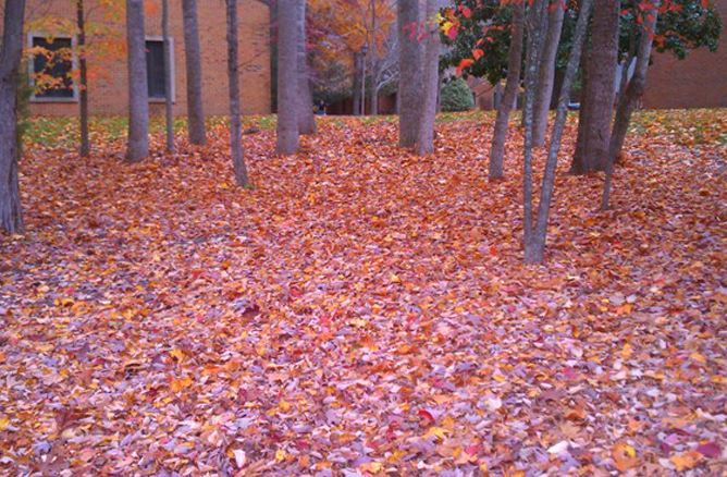 Leaves on ground under trees